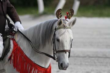 誘導馬カレンダー画像
